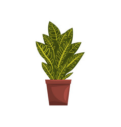Codicium indoor house plant in brown pot element vector