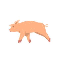 cute cartoon little pig running vector image