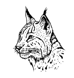 Hand drawn lynx head vector image