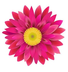 Pink Gerbera vector image vector image