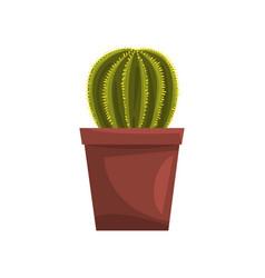 Cactus indoor house plant in brown pot element vector