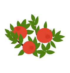 Cranberry is a flat design of an isolated red vector