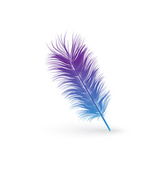 fluffy blue and purple bird feather vector image