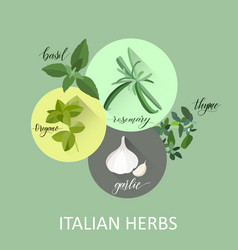 Popular culinary herbs vector