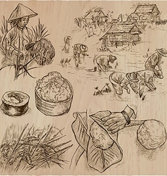 Rice crop Agriculture An hand drawn set vector