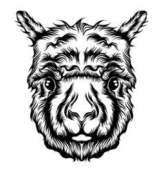 single head alpaca tattoo animation vector image