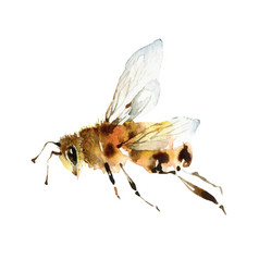 watercolor cute bee on white background vector image
