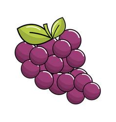 delicious grape fruits icon vector image vector image
