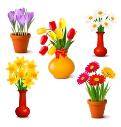 Spring and summer colorful flowers in vases vector image vector image