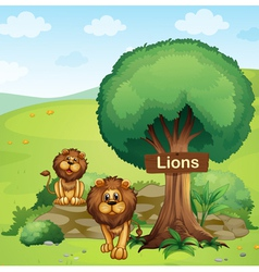 A signboard posted in a tree and two lions vector