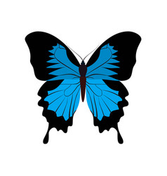 Big collection of colorful butterflies vector
