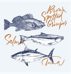 Delicates fish tuna salmon brown spotted grouper vector