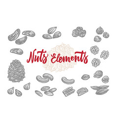 Hand drawn nuts elements set vector