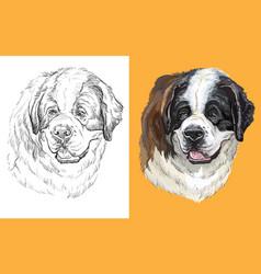 Portrait dog st bernard vector