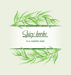 spicy herbs in a realistic style frame on vector image