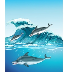 Three dolphins swimming in the ocean vector image