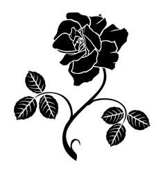 decorative rose flower vector image