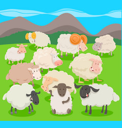 Flock of sheep characters cartoon vector