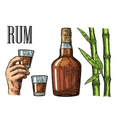 Glass and bottle of rum with sugar cane vector image