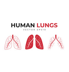 human lungs set icons and medical symbols vector image