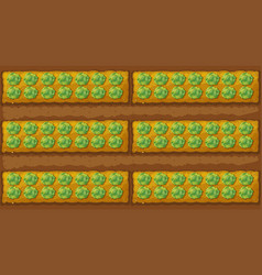 Top view of cabbage garden vector