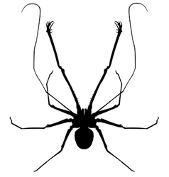 whip spider vector image
