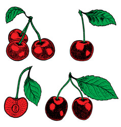 set of hand drawn cherry design elements for vector image vector image