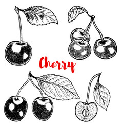 set of hand drawn cherry on white background vector image