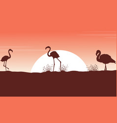 collection flamingo landscape silhouettes at vector image