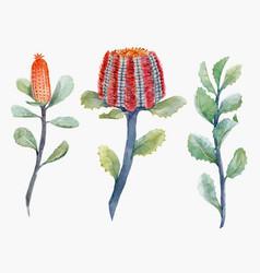 Watercolor australian banksia set vector