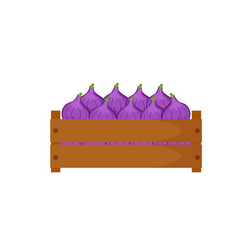 wooden box with figs isolated vector image