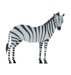 zebra cartoon isoated african equids horse vector image