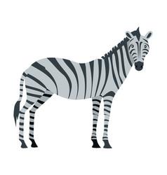 zebra cartoon isoated african equids horse vector image vector image