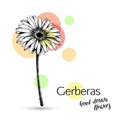 Gerbera flower for wedding or birthday card vector image vector image