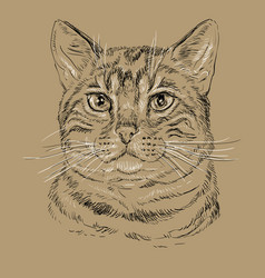 Bengal at on brown background vector