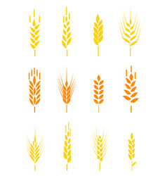 cereals icon set with rice wheat corn oats rye vector image