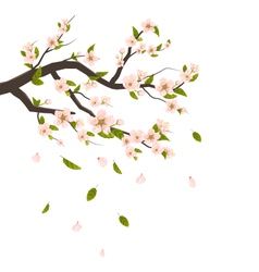 Cherry Blossom Branch of Tree with Flying Petals vector image vector image
