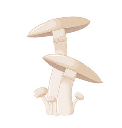 different mushrooms champignon of vector image