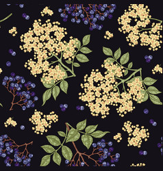 elderberry and elderflower seamless pattern hand vector image