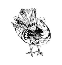 hand drawn dove vector image