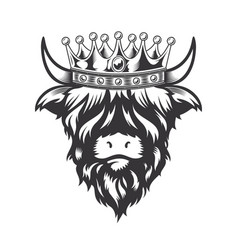 Highland cow king with crown head design on white vector
