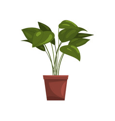 House plant in brown pot element for decoration vector
