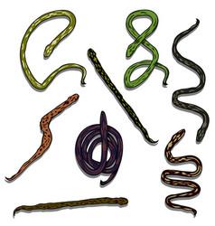 snake reptile set vector image