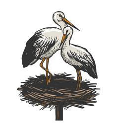 stork in nest animal sketch engraving vector image