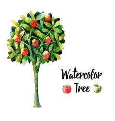 Watercolor apple tree vector image