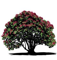 Pohutukawa tree vector image
