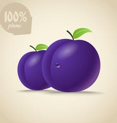 Fresh violet plums vector