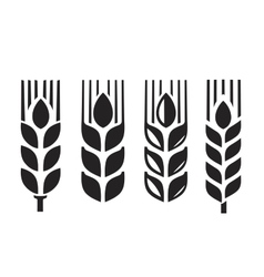 Black wheat vector