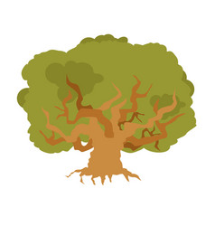 Oak isolated large old tree huge bush vector