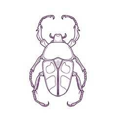 Outline Beetle Bug Insect Jumnos ruckeri vector